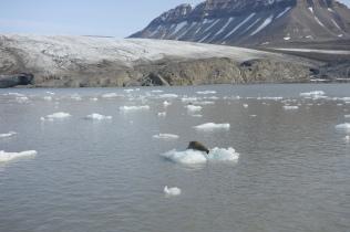 Nordenskiöldbreen, Spitzbergen